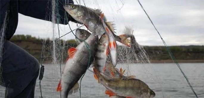В Чуднівському районі викрито порушення правил рибальства