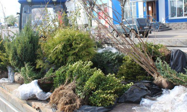 Проведено озеленення території Чуднівської громади