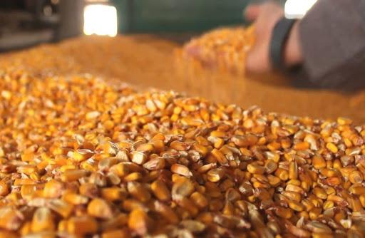 На Чуднівщині під час сушіння згоріло 3 тонни кукурудзи