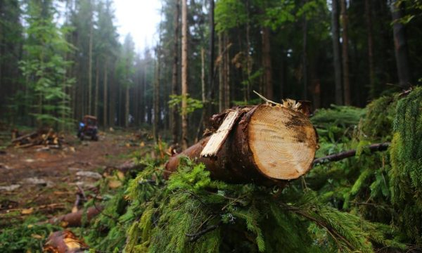 Під час лісових робіт загинув житель Карвинівки